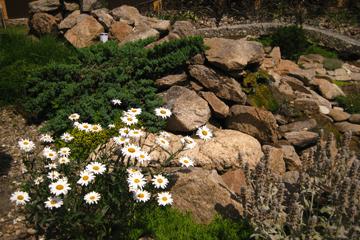 Альпийская горка и рокарий