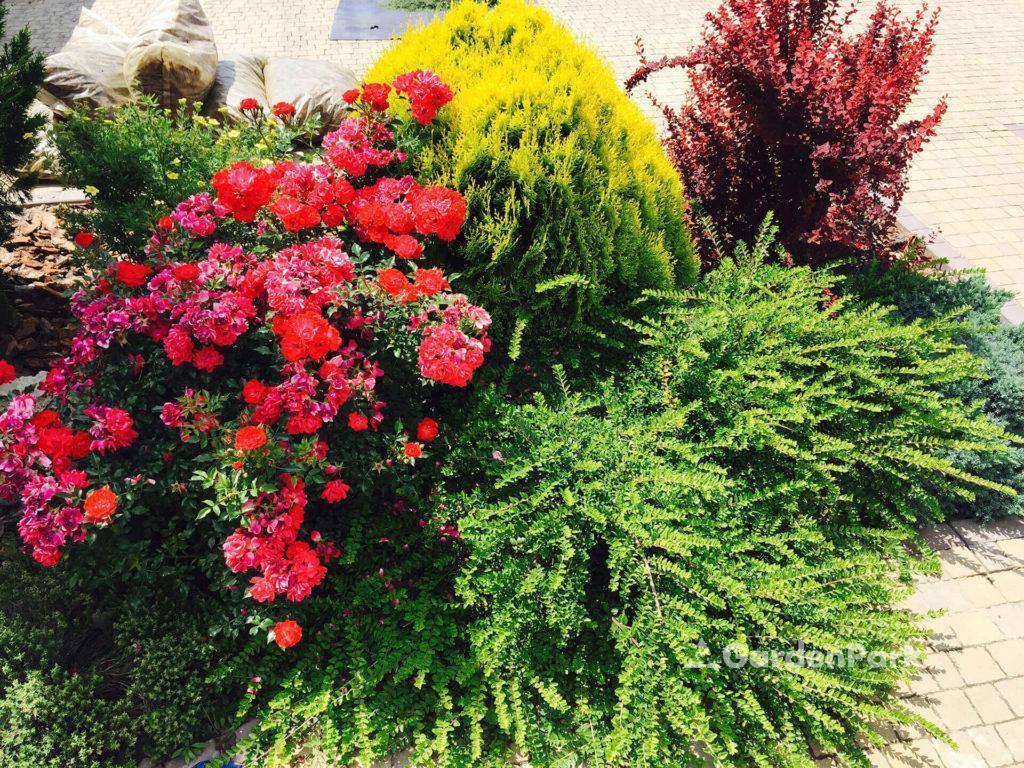 Облаштування квітників і міксбордов