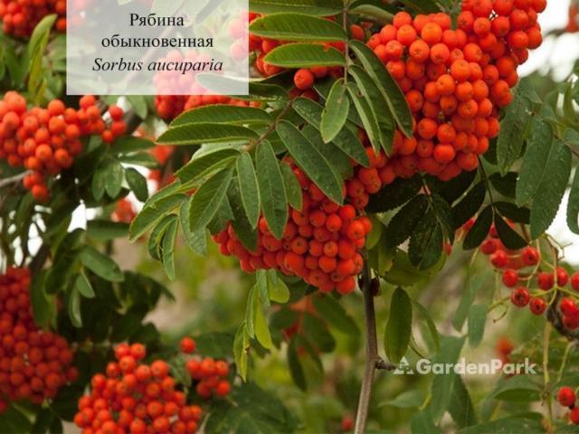 Лиственные растения