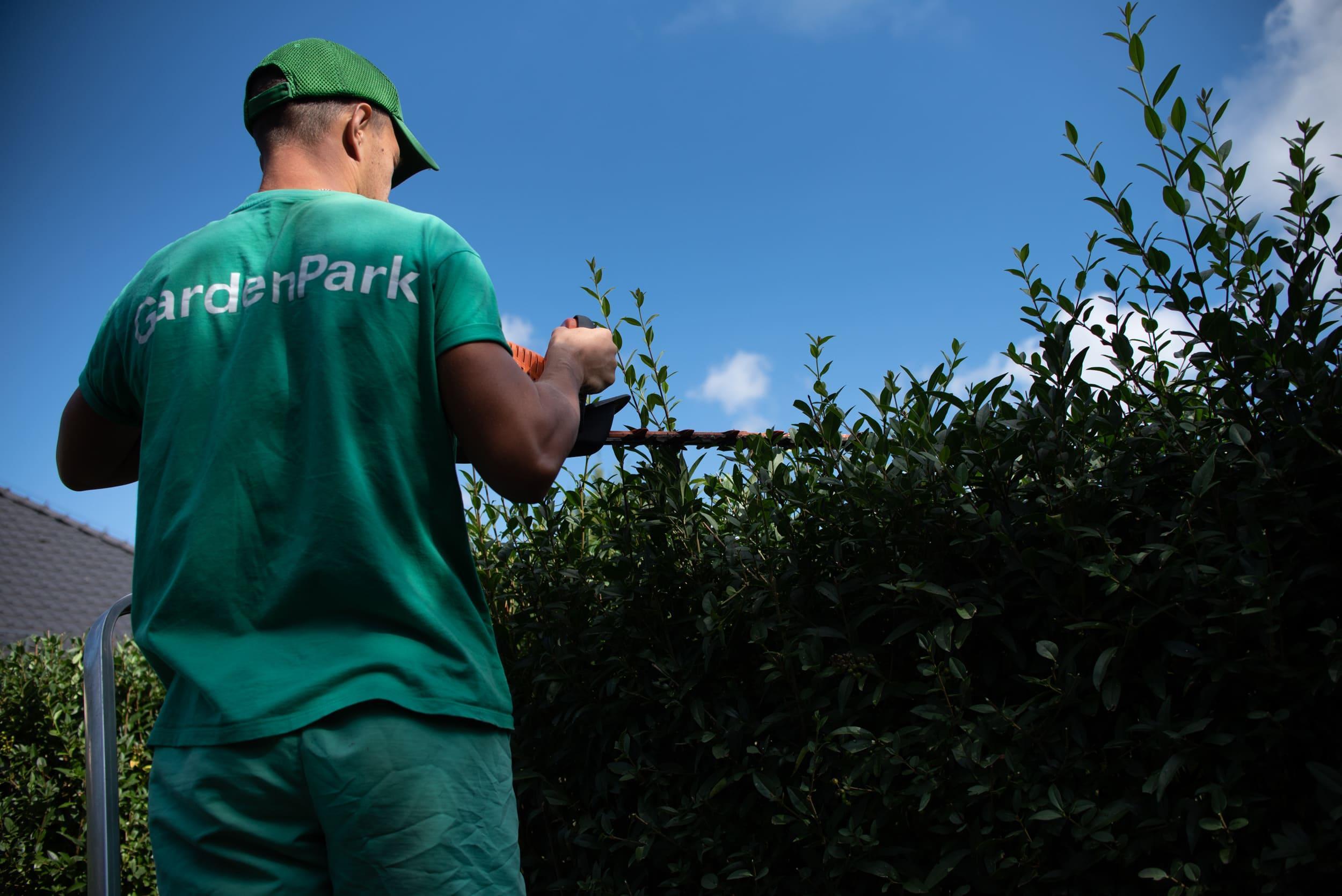 Догляд за ділянками. Скільки разів на рік потрібно доглядати за садом?
